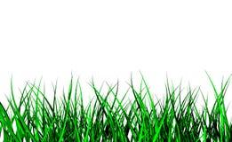 Wild 3d grass. Bright green 3d rendered grass Stock Photography