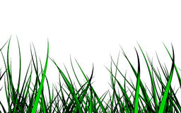 Wild 3d grass. Isolated on white stock illustration