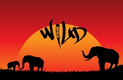 Wild Africa. Living in the African grasslands, wild animals Royalty Free Illustration