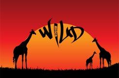 Wild Africa. Living in the African grasslands, wild animals Vector Illustration
