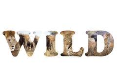 Wild Africa Stock Image