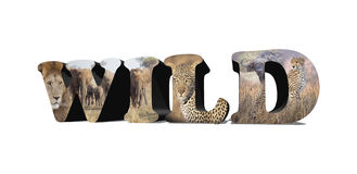 Wild Africa Royalty Free Stock Photography