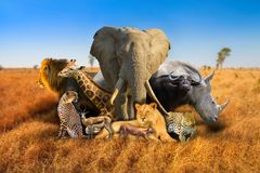 Wild african animals composition. Big Five and wild african animals composition on savannah nature bokeh background. Serengeti wildlife area in Tanzania, Africa stock photo