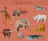 Wild african animals set with nature elements. Stock Photos