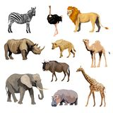 Wild African Animals Set Stock Image