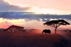 Wild African elephant in the savannah. Serengeti National Park. Wildlife of Tanzania. African art image. Free copy space stock photos