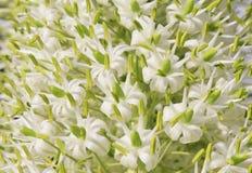 Wild afrikanska blommor - Slingra-huvud gift 2 Arkivfoton