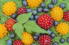 Wild Alaskan berries Royalty Free Stock Images