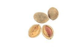 Wild Almond (Irvingia malayana Oliv. Ex A. Benn.). Irvingia malayana placed on a white background Royalty Free Stock Images