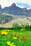 Wild alpine flowers on the Glacier National Park landscape Royalty Free Stock Image