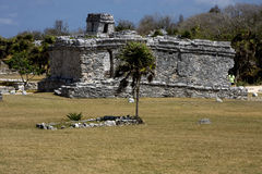 Wild angle of the tulum temple in  mexico america Stock Images