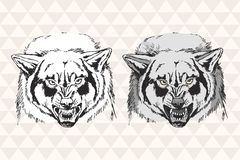 Wild angry wolf. Vector Graphics hand-drawn illustration Stock Photo