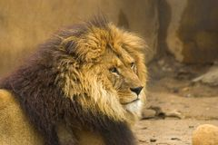 Wild Animal. In zoo royalty free stock photography