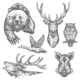 Wild hunting animals and birds sketches. Wild animal and bird isolated sketch with bear and deer, moose and owl, boar, elk and duck. Carnivore and herbivore Stock Photos