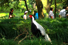 The wild animal and birds in Shenzhen safari park Royalty Free Stock Photography