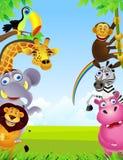 Wild animal cartoon Stock Images