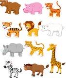Wild animal cartoon Royalty Free Stock Photos