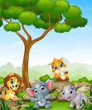 Wild animal cartoon in the jungle Stock Photos