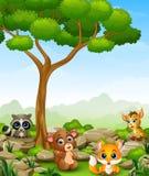 Wild animal cartoon in the jungle Royalty Free Stock Photos