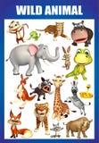 Wild animal chart Stock Photography