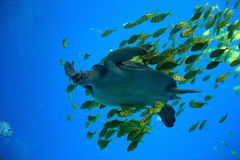The wild animal and fish  in aquarium Royalty Free Stock Images
