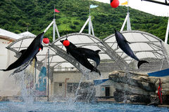 The wild animal and fish  in aquarium Royalty Free Stock Photo