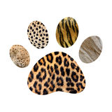 Wild animal footprint Royalty Free Stock Image