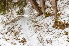 Animal footprints in the snow. Wild animal footprints in the snow Royalty Free Stock Images