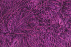 Wild animal fur background. Wild purple animal fur background Stock Photo