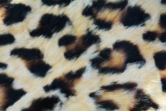 Wild animal fur background with spots Stock Image