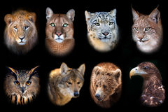 Wild animal icon. Collection isolated on black background Royalty Free Stock Image