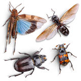 Wild animal insect Stock Photo