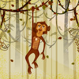 Wild animal Monkey in jungle forest background Stock Photo