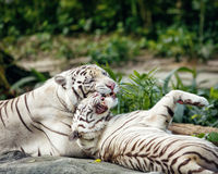 Wild animal in nature Royalty Free Stock Photography