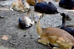 Wild animal Royalty Free Stock Image