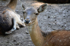 Wild animal Stock Photography