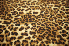 Wild animal pattern Stock Photos