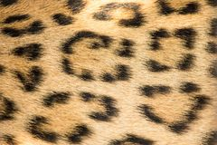 Wild animal pattern background or texture close up. royalty free stock photos