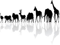 Wild animal silhouette Stock Photography
