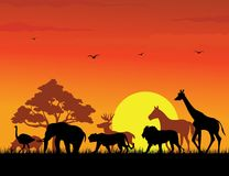 Wild animal silhouette Stock Photos