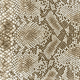 Wild animal skin pattern Royalty Free Stock Image