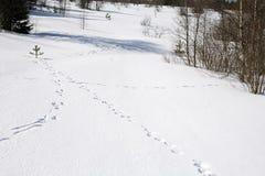 Wild animal traces Stock Photos