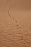 Wild animal trail in a desert Royalty Free Stock Image