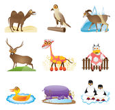 Wild animal vector. Vector vector of wild animal - cartoon series 2 Royalty Free Stock Photo