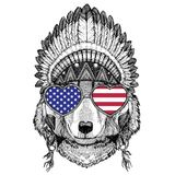 Wolf Dog Wild animal wearing indian hat Headdress Stock Images