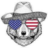 Wolf Dog Wild animal wearing sombrero Mexico Fiesta  Stock Photography