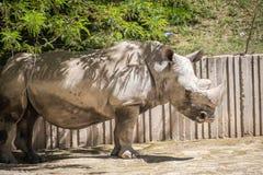 Wild animal Stock Image