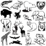 Wild Animals 1 Stock Image
