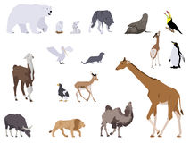 Wild animals Royalty Free Stock Photos