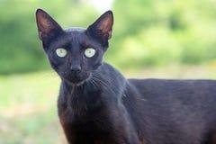 Wild animals. The closeup of wild cat Royalty Free Stock Photo
